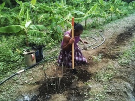 Gertrude-prepares-the-soil-for-the-bed
