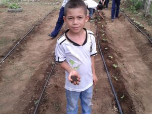 transplanting_seedlings